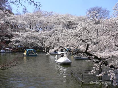 kichijyoji inokashira park
