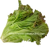 lettuce group